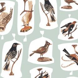 Natural History - Birds